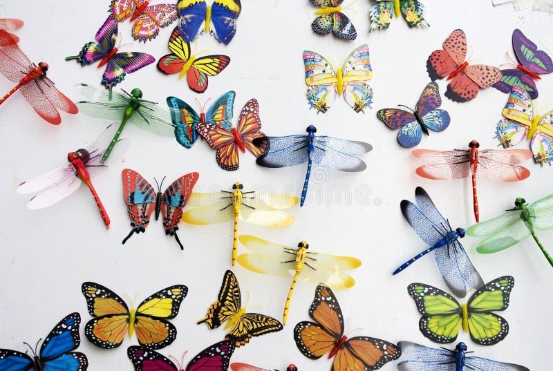έντομα συλλογής στοκ φωτογραφία με δικαίωμα ελεύθερης χρήσης