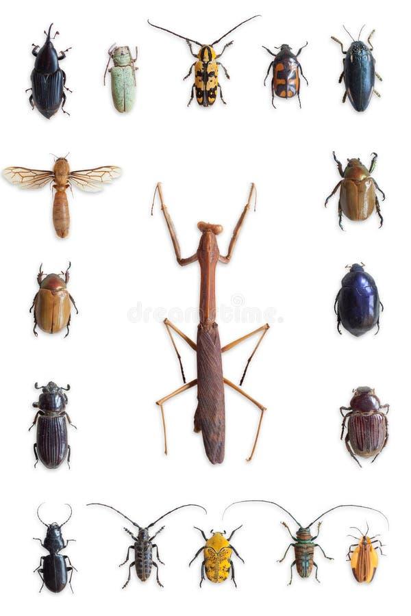 Έντομα στοκ εικόνα