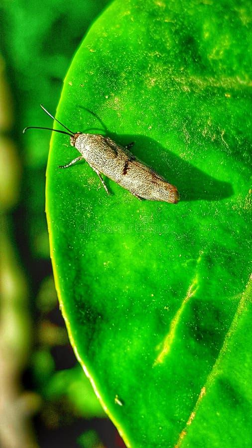 έντομα στοκ εικόνες με δικαίωμα ελεύθερης χρήσης