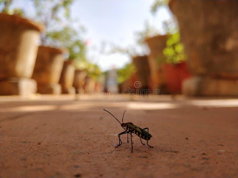 Έντομα POV στοκ φωτογραφία με δικαίωμα ελεύθερης χρήσης