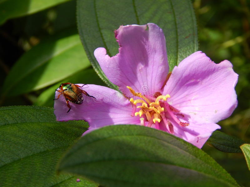 έντομο λουλουδιών στοκ εικόνα με δικαίωμα ελεύθερης χρήσης