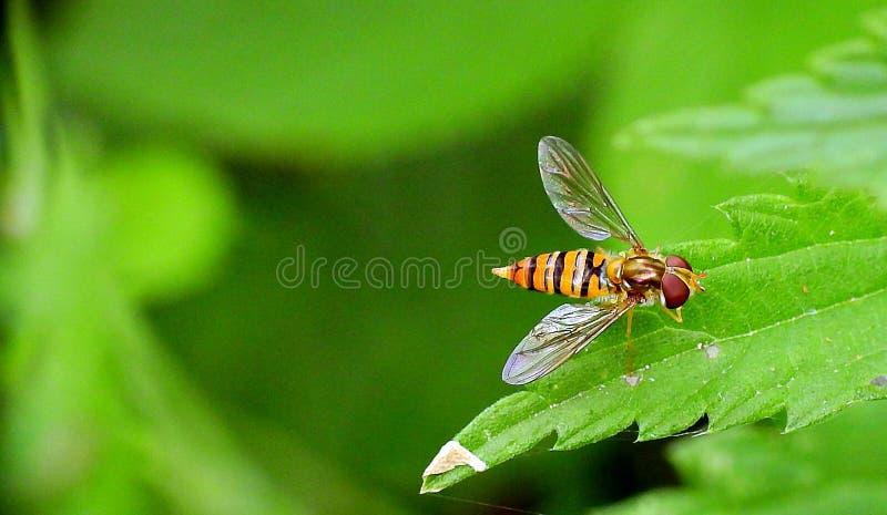 Έντομο σε ένα πράσινο φύλλο στοκ φωτογραφία με δικαίωμα ελεύθερης χρήσης