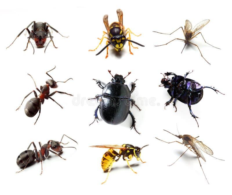 έντομο συλλογής στοκ εικόνες