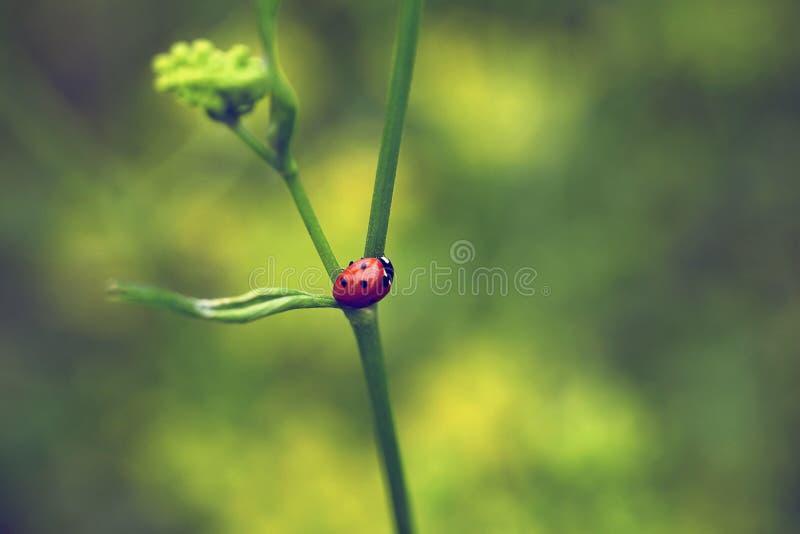 Έντομο φύσης στοκ εικόνα με δικαίωμα ελεύθερης χρήσης