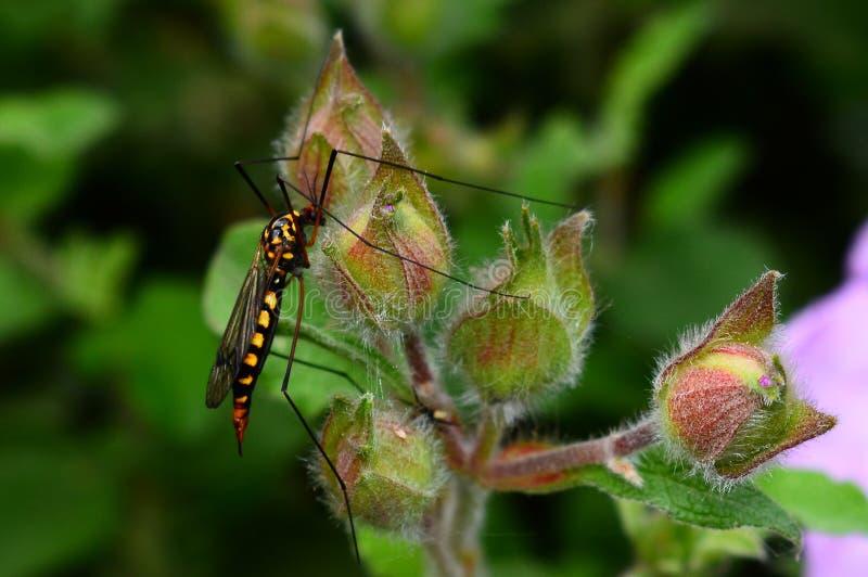 έντομο στοκ φωτογραφίες