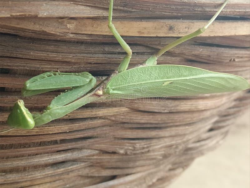 έντομο στοκ φωτογραφία με δικαίωμα ελεύθερης χρήσης