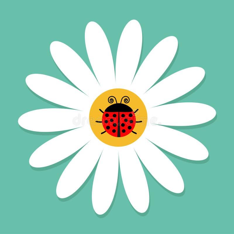 Έντομο Ladybug λαμπριτσών στην άσπρη μαργαρίτα chamomile Camomile εικονίδιο διανυσματική απεικόνιση