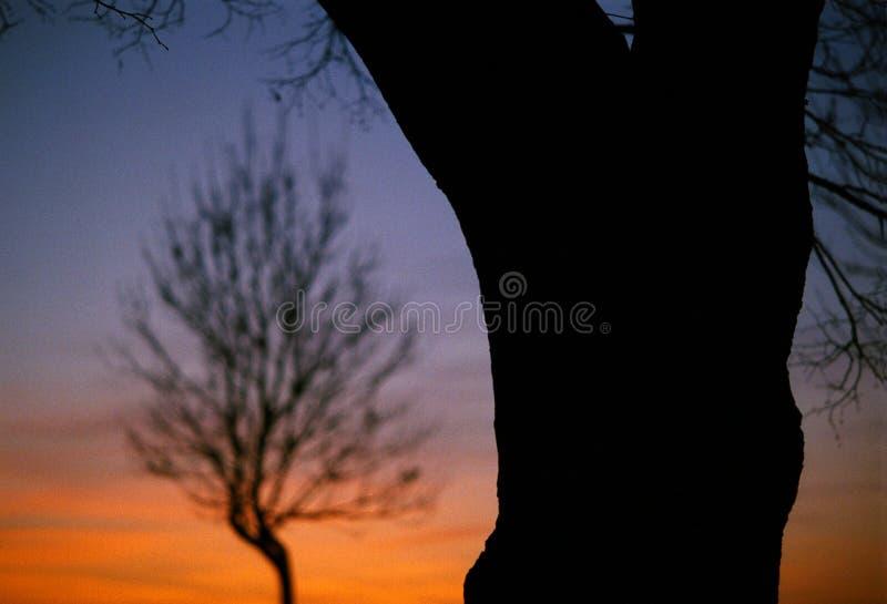 έντονο λεπτό δέντρο στοκ φωτογραφία με δικαίωμα ελεύθερης χρήσης