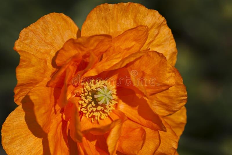 έντονο πορτοκάλι στοκ εικόνες