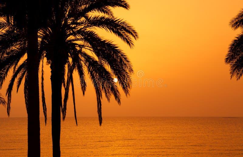 δέντρα ηλιοβασιλέματος &si στοκ φωτογραφίες