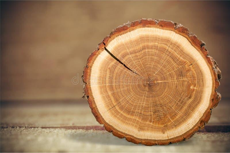 δέντρο δαχτυλιδιών στοκ εικόνες