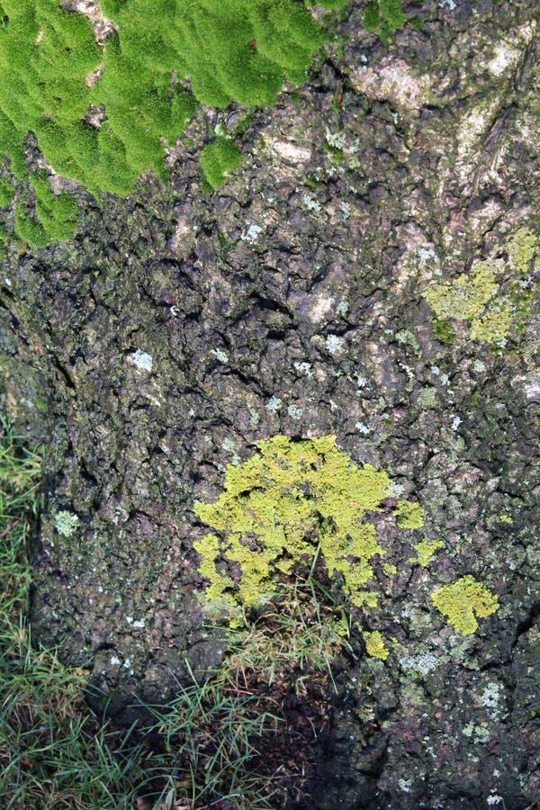 δέντρο λεπτομέρειας στοκ φωτογραφία με δικαίωμα ελεύθερης χρήσης