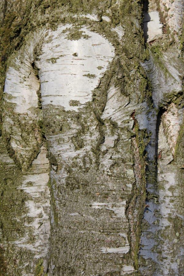 δέντρο λεπτομέρειας στοκ εικόνες