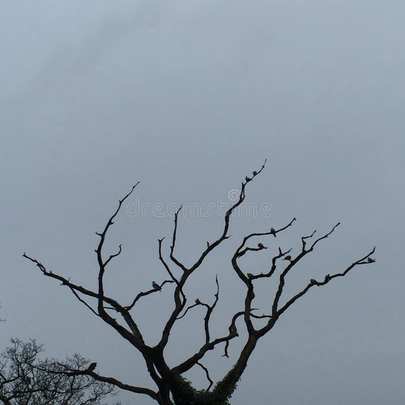 δέντρο με τα birdies στοκ φωτογραφία με δικαίωμα ελεύθερης χρήσης