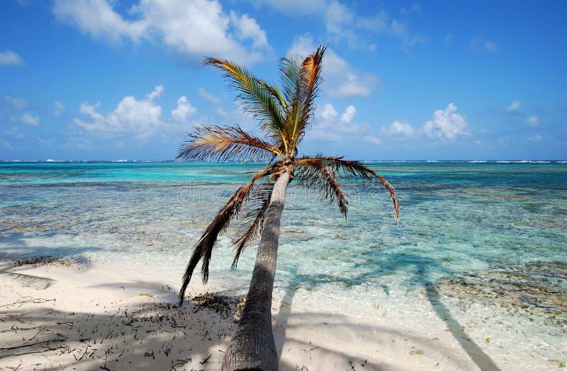 δέντρο παραδείσου φοινικών νησιών παραλιών στοκ εικόνες