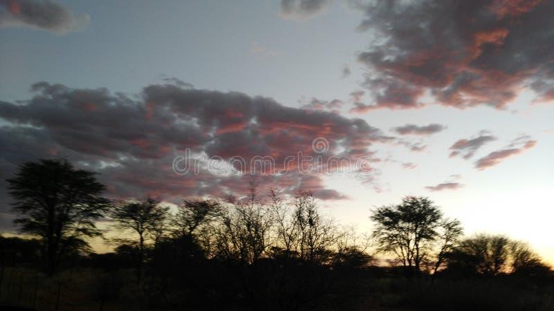 δέντρο ριζών ιδιαιτερότητας φύσης ομορφιάς στοκ φωτογραφία με δικαίωμα ελεύθερης χρήσης