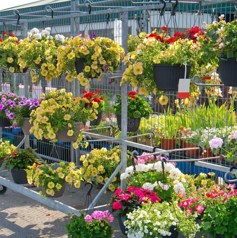 ένωση κήπων κεντρικών λουλουδιών καλαθιών στοκ φωτογραφία