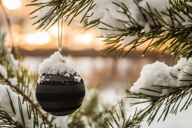 Ένωση σφαιρών Χριστουγέννων στο χριστουγεννιάτικο δέντρο στοκ φωτογραφίες με δικαίωμα ελεύθερης χρήσης
