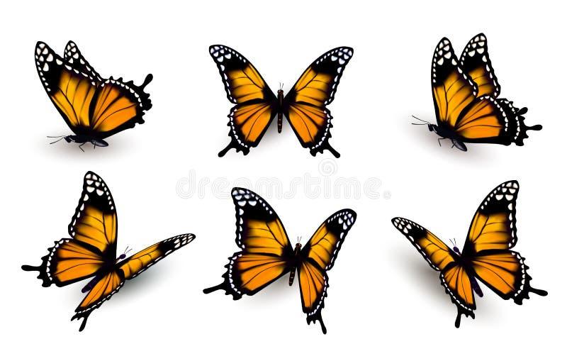 Έξι πεταλούδες καθορισμένες ελεύθερη απεικόνιση δικαιώματος