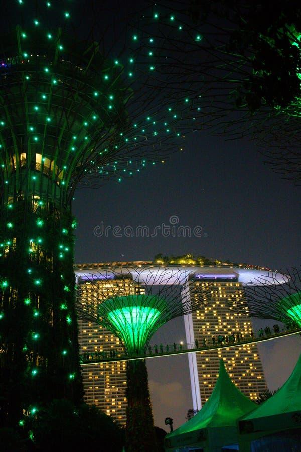 Έξοχα δέντρα στους κήπους από τον κόλπο Σιγκαπούρη, σκηνή νύχτας στοκ φωτογραφία με δικαίωμα ελεύθερης χρήσης