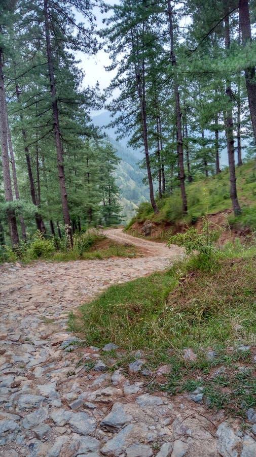 Έξοχοι ζαλίζοντας λόφοι Shimla απόψεων φύσης στοκ εικόνα με δικαίωμα ελεύθερης χρήσης