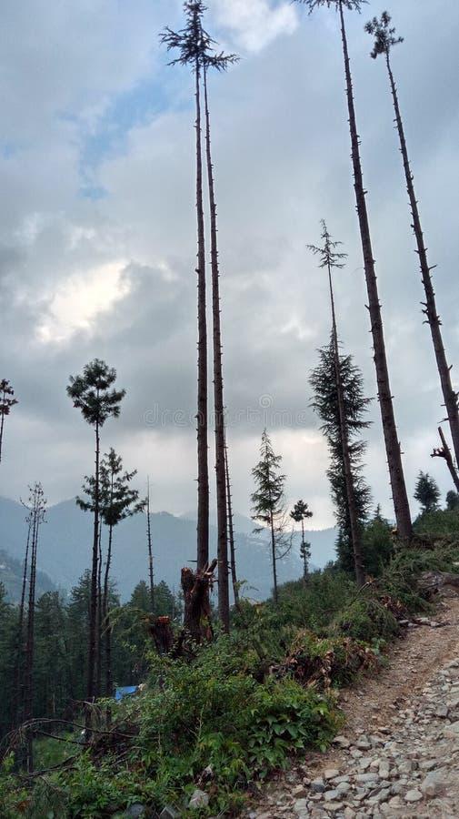 Έξοχοι ζαλίζοντας λόφοι Shimla απόψεων φύσης στοκ εικόνες