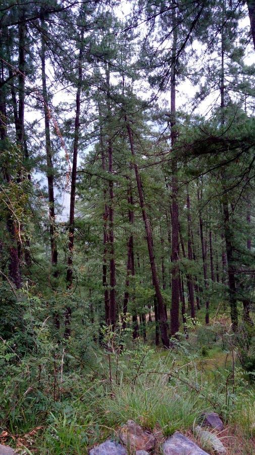 Έξοχοι ζαλίζοντας λόφοι Shimla απόψεων φύσης στοκ φωτογραφία με δικαίωμα ελεύθερης χρήσης