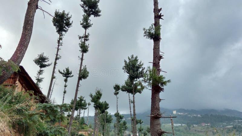 Έξοχοι ζαλίζοντας λόφοι Shimla απόψεων φύσης στοκ φωτογραφία