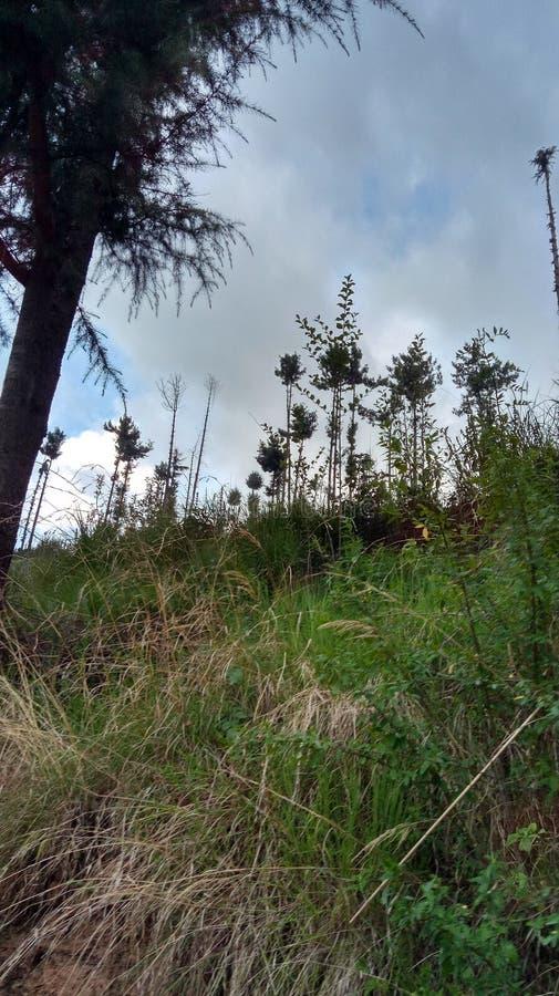 Έξοχοι ζαλίζοντας λόφοι Shimla απόψεων φύσης στοκ εικόνα