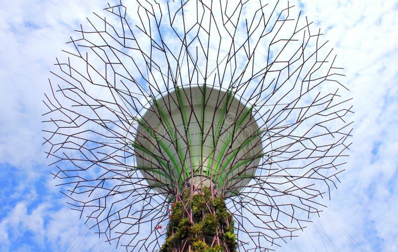 Έξοχο άλσος δέντρων στοκ φωτογραφία με δικαίωμα ελεύθερης χρήσης