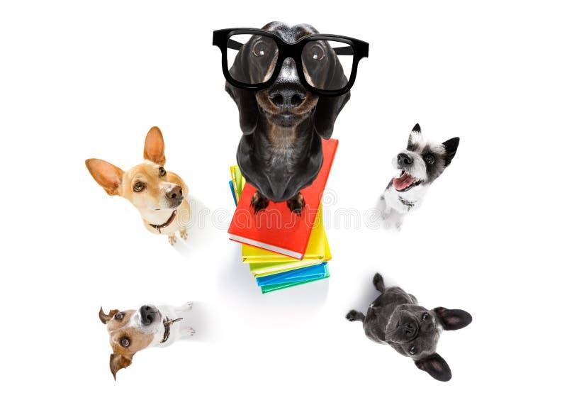 Έξυπνα σκυλί και βιβλία στοκ εικόνα