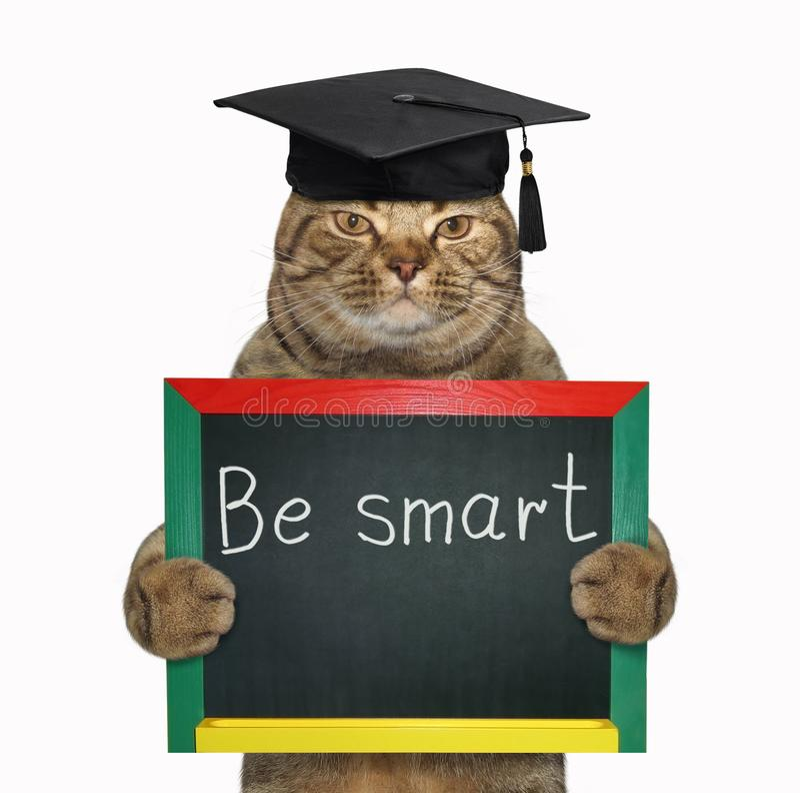 Έξυπνη γάτα με έναν πίνακα στοκ εικόνα