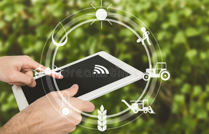 Έξυπνη καλλιέργεια, άτομο με την ψηφιακή ταμπλέτα στον τομέα στοκ εικόνα