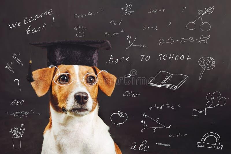 Έξυπνη συνεδρίαση σκυλιών κοντά στον πίνακα στοκ εικόνες