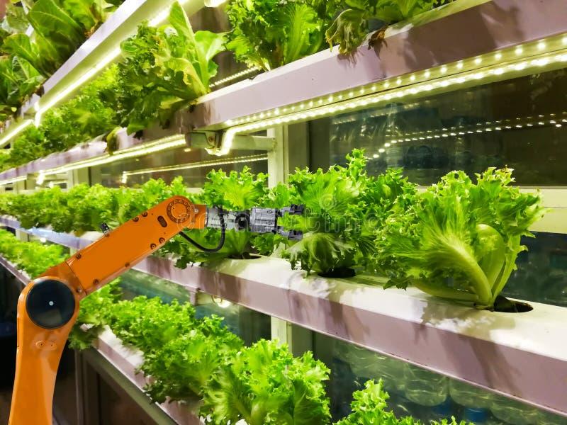 Έξυπνοι ρομποτικοί αγρότες στη φουτουριστική αυτοματοποίηση ρομπότ γεωργίας στο λαχανικό στοκ εικόνα με δικαίωμα ελεύθερης χρήσης