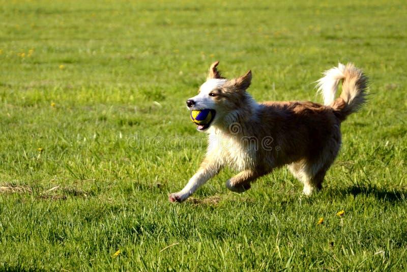 Έξυπνο και υπάκουο σκυλί στοκ εικόνες με δικαίωμα ελεύθερης χρήσης