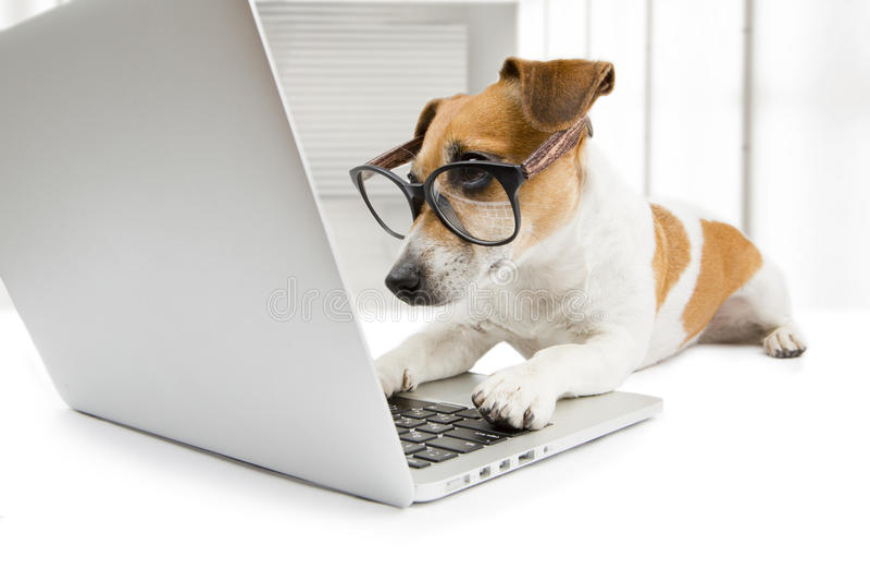 Έξυπνο σκυλί που εργάζεται με το PC στοκ εικόνες