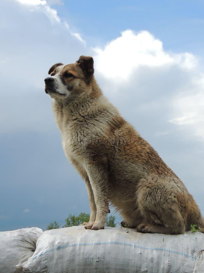 έξυπνο σκυλί στοκ εικόνες