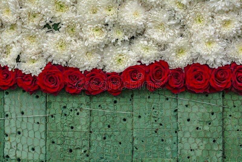 Έργο υπό κατασκευή: Τοίχος των ροδαλών λουλουδιών στο Floral αφρό στοκ φωτογραφία