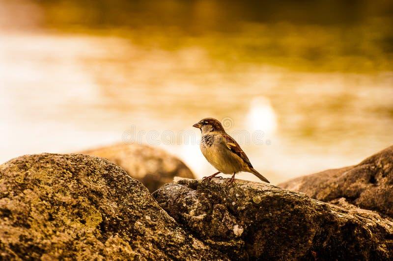 Έρευνα Birdie στοκ φωτογραφίες με δικαίωμα ελεύθερης χρήσης