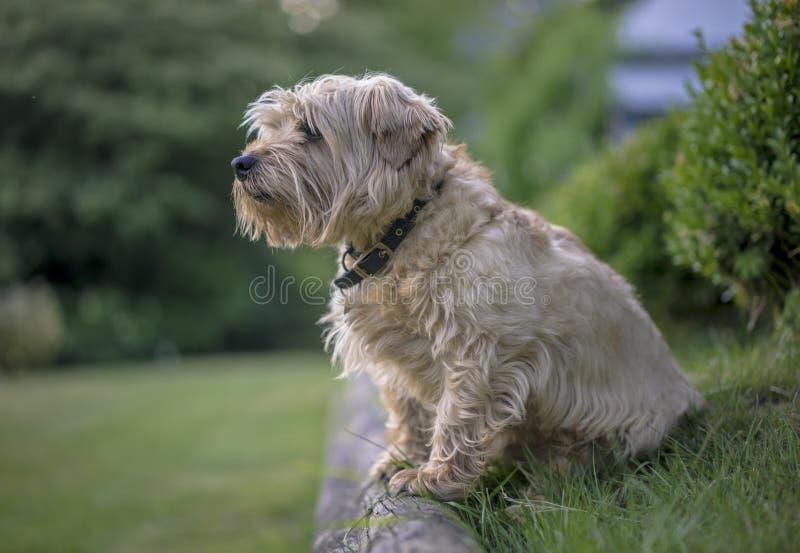 Download Έρευνες σκυλιών στοκ εικόνες. εικόνα από breckenridge - 62720404