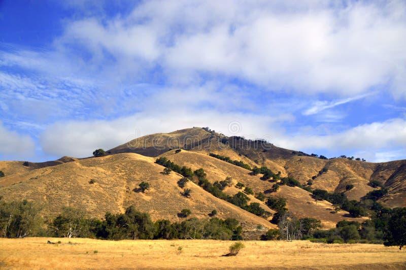 Έρημος Καλιφόρνια οδικών κοιλάδων δέντρων στοκ φωτογραφίες