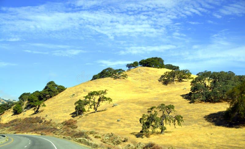 Έρημος Καλιφόρνια οδικών κοιλάδων δέντρων στοκ φωτογραφία με δικαίωμα ελεύθερης χρήσης
