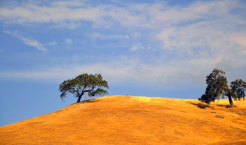Έρημος Καλιφόρνια οδικών κοιλάδων δέντρων στοκ φωτογραφίες με δικαίωμα ελεύθερης χρήσης