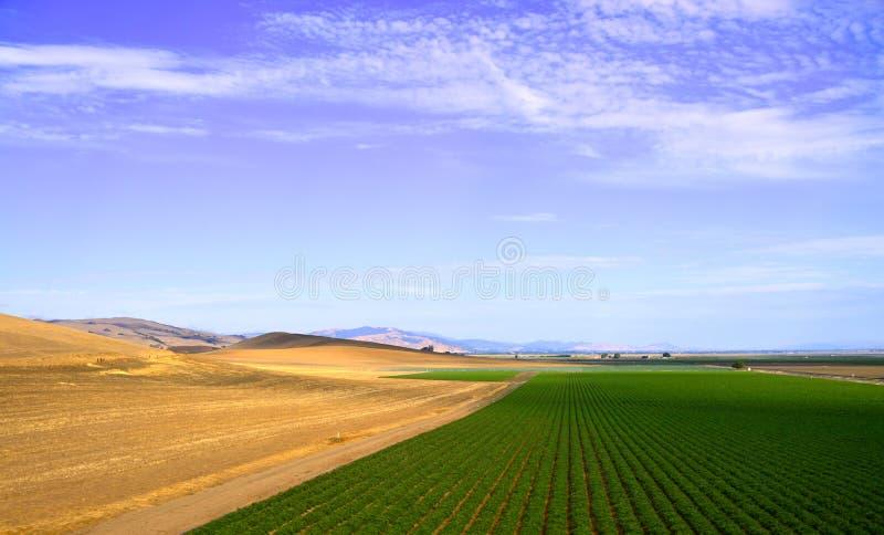 Έρημος Καλιφόρνια οδικών κοιλάδων δέντρων στοκ εικόνα