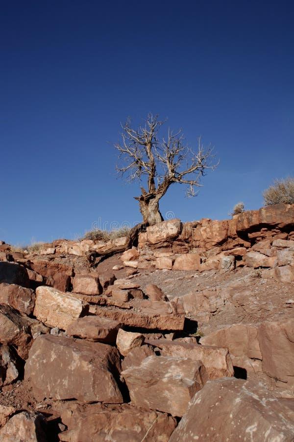 έρημος ξηρά στοκ φωτογραφία