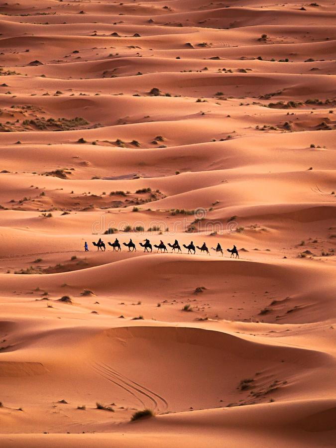 έρημος Σαχάρα τροχόσπιτων καμηλών στοκ εικόνες