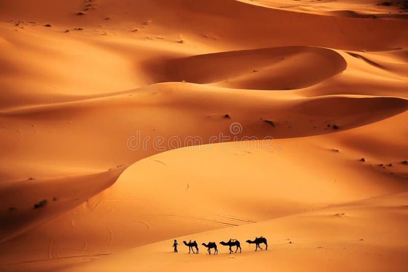 έρημος Σαχάρα στοκ εικόνες