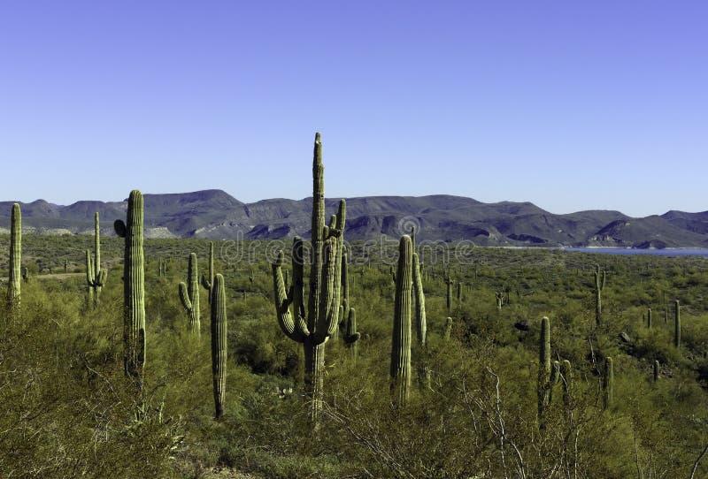 έρημος της Αριζόνα στοκ φωτογραφίες