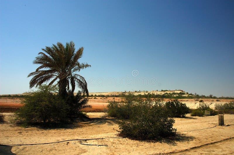 Download έρημος στοκ εικόνα. εικόνα από φυτά, καλλιέργεια, δέντρα - 1525227